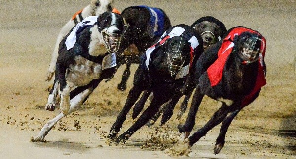 Irish greyhound derby betting 2021 dodge poule dessai des poulains 2021 betting